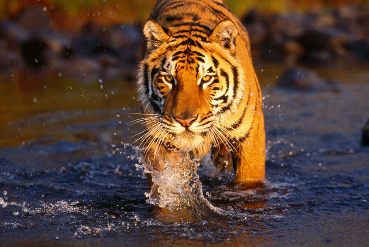 Bardia Wildlife Safari fixed departure spring/autumn 2018/2019 cost & itinerary